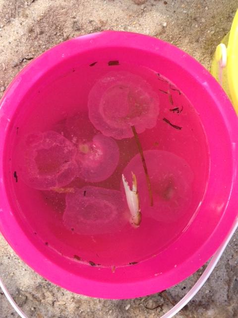 beach-bucket