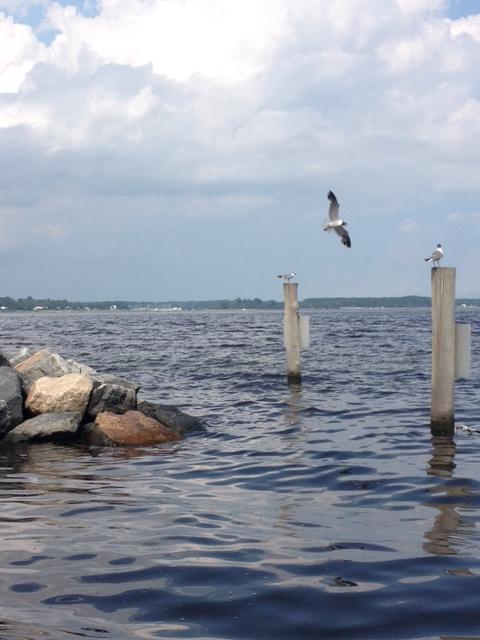 beach-seagull