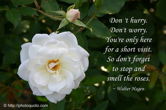 Quote Smell Roses